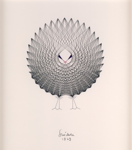 Peacock. H. Stoeckle, 1969